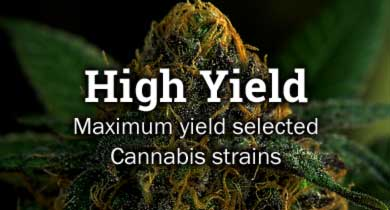 High Yield