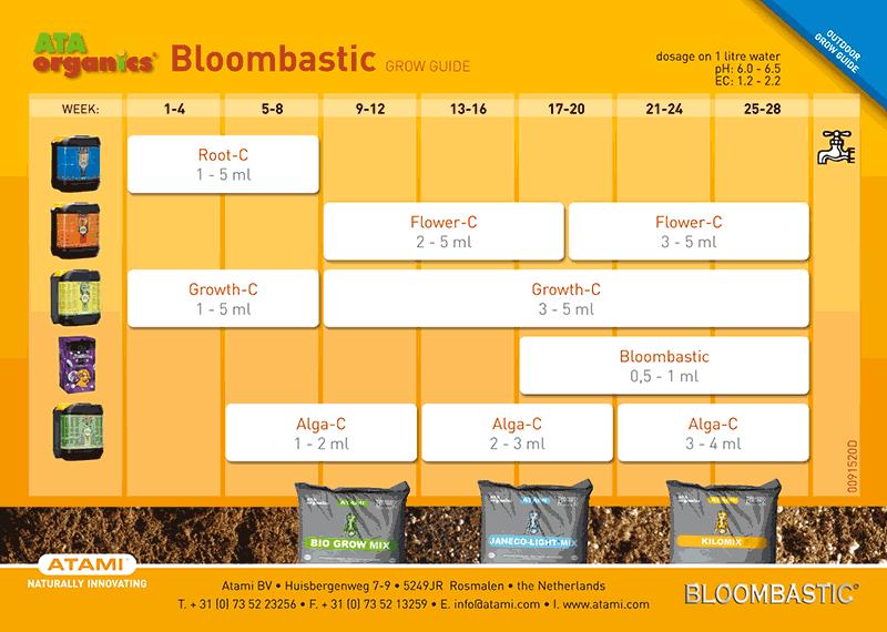 Bloom C Bloombastic