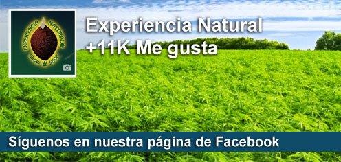 Sementes de maconha Experiencia Natural no facebook